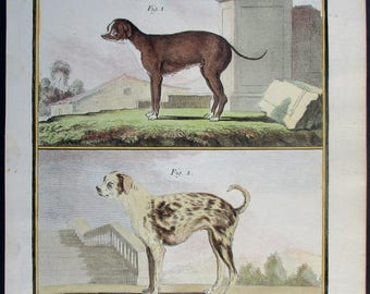 "1783 Small Dogs, ""Le Roquet"". Buffon Antique Handcolored Engraving. Original Natural History 200 years old. Vintage"