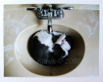 Tuxedo Cat Cards - Tuxedo Cat in Sink - Blank Note Cards - Gift for Cat Lover - Tuxedo Cat Stationary