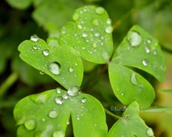 Raindrops On Clover Plant Square Canvas Print 20cm x 20cm