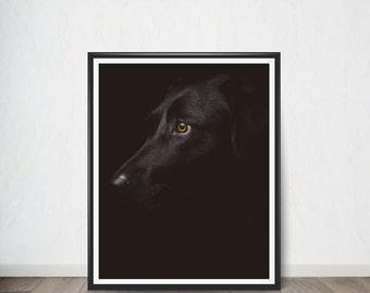 Dog Digital print Poster, Art Print, Digital Art, Digital Art Print, Digital Artworks, Digital Print Art, Digital Art Download