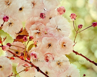 Cherry Tree Flowers Photography, shabby chic green pink wall art, floral home decor, baby nursery - 8x8