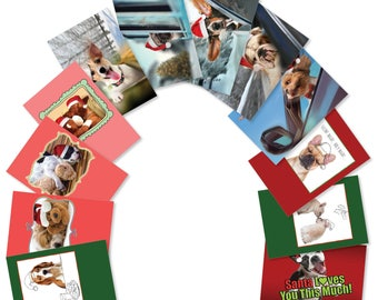 A5642XSG-B1x12 'Puppy Holidays': Assorted Box of 12 Christmas Cards  Ft. Assorted Images of Holiday Dogs with Santa Hats