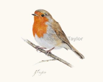 ROBIN: Fine quality print of a watercolour bird painting by Jan Taylor.