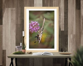 Butterfly photography print, butterfly decor, butterfly print, picture of butterfly, girl's room decor, baby girl nursery decor, nursery art