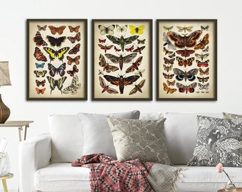 Butterfly print set of 3 butterfly poster, Butterfly print, butterflies wall decor, scientific illustration, instant collection