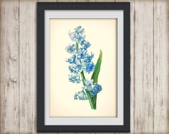 Digital Botanical Print - Redoute - botanical poster - artwork- tulip - botanical illustration - botany print - INSTANT DOWNLOAD ART No 25