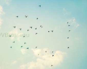 Sky and birds - pastel shades - birds in the sky - sky picture birds - photography zen sky picture