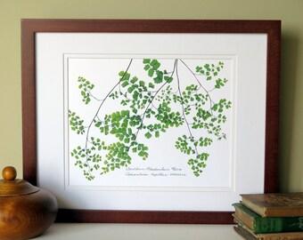 Pressed fern print, 11x14 double matted, Southern Maidenhair Fern, botanical fern print, wall art no. 0094