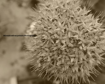 Sepia flowers - Vintage flower photography - Sepia photography