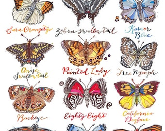 Butterfly print. Butterflies of North America illustration. Poster. Rainbow colors. Garden. Nature. Home decor. Lepidoptera.