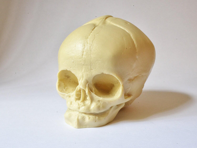 Baby Skull Images - human anatomy organs diagram