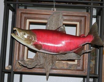 "23"" Sockeye Salmon Reproduction"