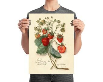 Vintage Botanical Strawberry Illustration Poster