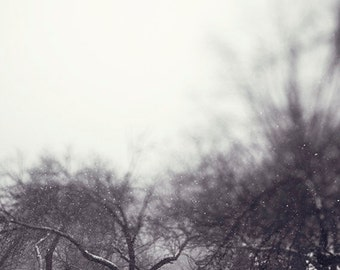 """Winter Home Decor Landscape Photograph, """"Softly Falling"""" Snow, White, Gray, Tree, Branches, Ethereal"""