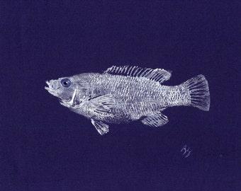 ORIGINAL Salt Water Atlantic Cunner best GYOTAKU fish rubbing wall art on Navy Cloth by Barry Singer