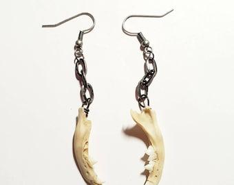 Jaw bone earring, real bone earrings