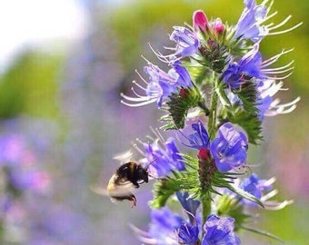 Bumblebees & Pollinators Wildflower Collection
