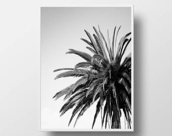 palm tree tropical photography black & white wall art california diy palm tree print tropical prints palm tree art poster nature photography