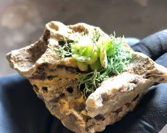 Mini Succulent Rock Garden