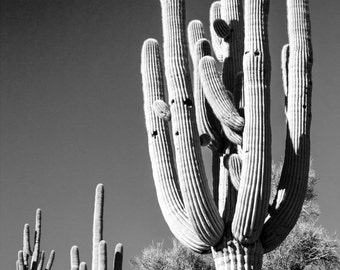 Custom Saguaro Cactus by Night Size 30x40
