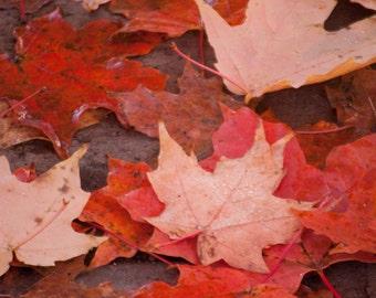 Fall foliage, nature wall art, rustic fall decor, fall photography, home decor, autumn photos, bathroom wall art