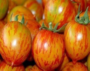 "Famous Hungarian medium sized tomato ""Vineyard Red"", Heirloom, NON GMO !"