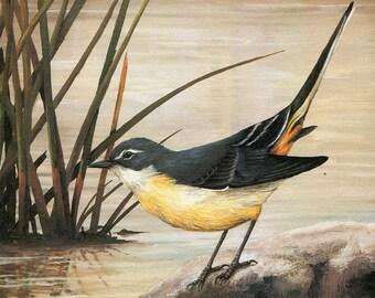 "Grey Wagtail ""Buy one, choose another free"" wagtail, wildlife, animal prints, bird prints, wildlife prints, animals, birds"