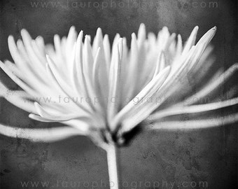 Bloom - Black and White Photograph