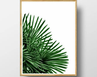 Palm Leaf Print, Palm Leaf Wall Art, Palm Tree Decor, Tropical Print, Tropical Wall Art, Tropical Decor, Tropical Palm Leaf, Wall Art, Print