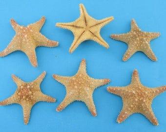 Azteca Starfish  (EA)