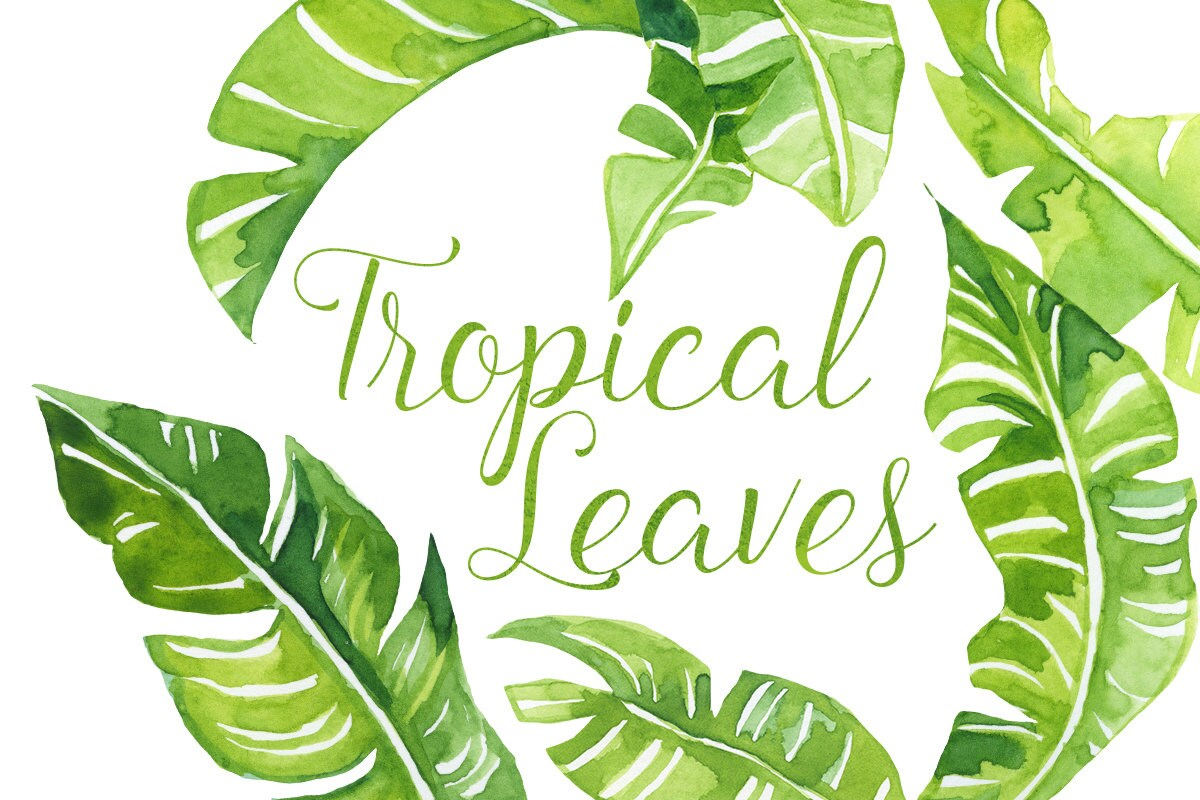 Watercolor Tropical Palm Leaves Clip Art Tropics Clipart