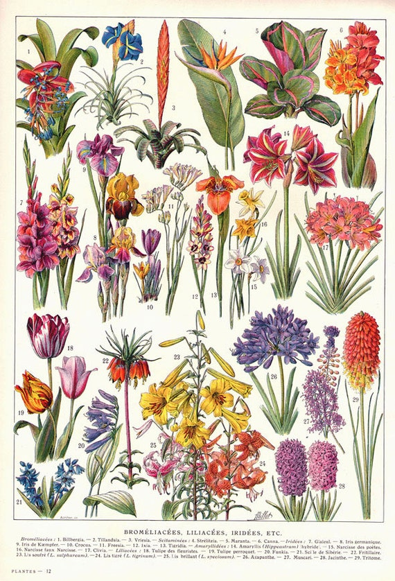 Antique French Flowers Chart 2 Digital Download Image