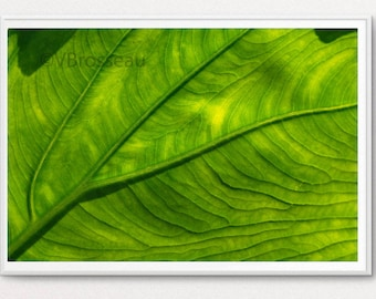 Leaf green - blue, grey, green - bright - wall decor picture