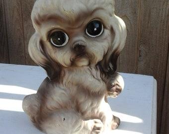 Big eyed poodle Norleans Japan