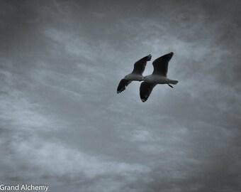 Seagull bird Pair against a moody sky color photography