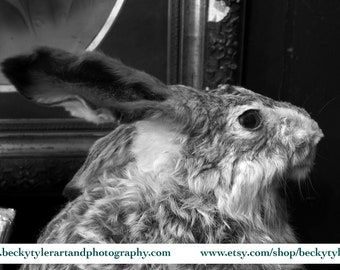 Creepy Taxidermy, Digital Photography, Fine Art Photo Print