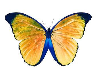 Butterfly, fine art print, wall art, art, large wall art print, fine art photography print, decoration, wall decor, home decor, fine art