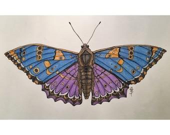 Blue Moth Print
