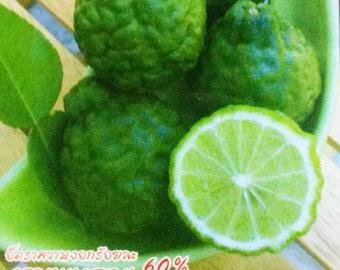 Kaffir Makrut Lime 5 Organic Seeds Thai Citrus hystrix FREE SHIPPING