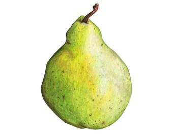 Pear Fruit Illustration Art Print