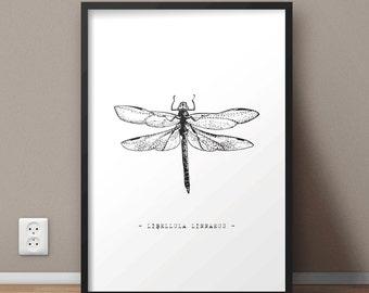 Libellula Linnaeus Printable Wall Art | Dragonfly Print | Insects Print | Large print 50x70 cm