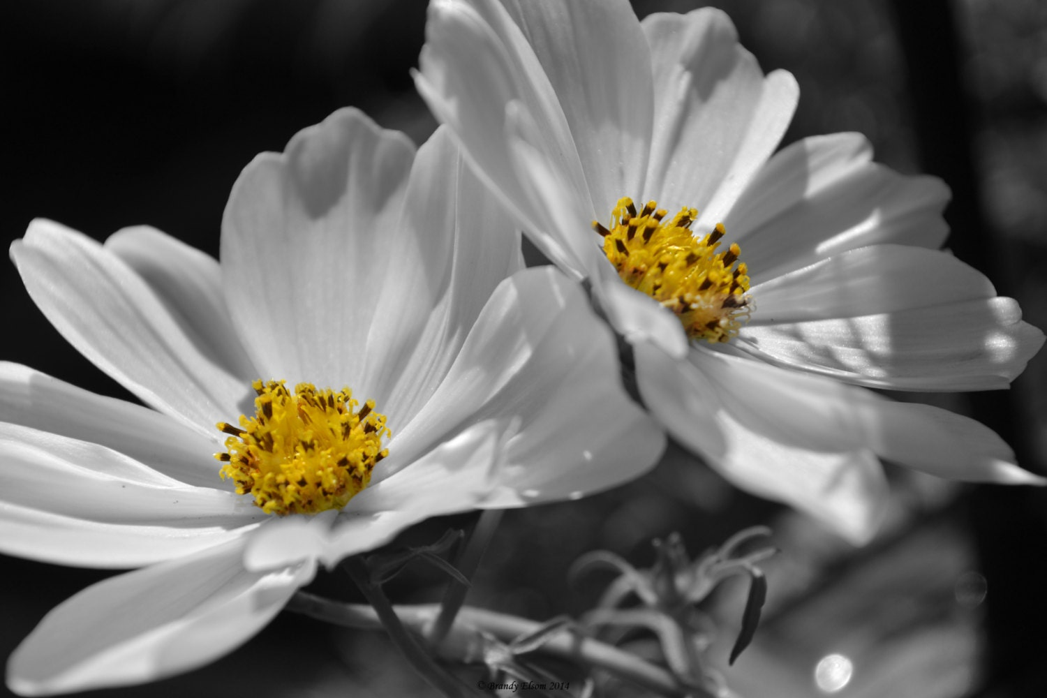 Flower photography wall art wall hangings black and white with zoom mightylinksfo