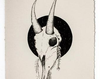 OREAMNOS // Mountain Goat Skull Paper Print