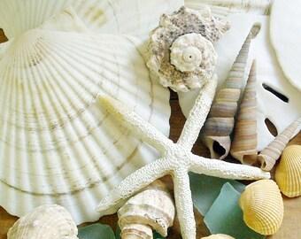 Seashells Photo 5x7 Signed Print Beachcomber's Bounty Cottage Wall Art