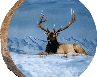 Majestic Elk - DAE022
