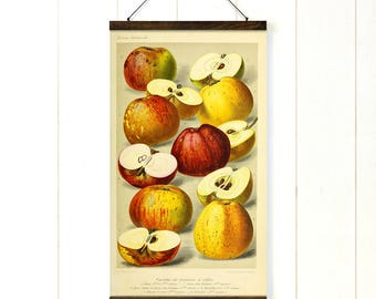 Botanical apple print pull down chart Kitchen art gift for mom Apple chart by G Severeyn in vintage style poster art for dining room wall