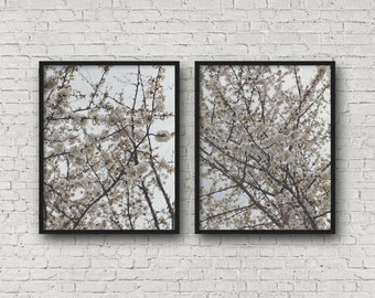 White spring blossoms fine art photography prints, spring tree blossoms, nature photography, art print, wall art (spring blossoms 02 03)