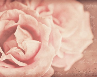 Floral Photography - Memories of Roses - fine art print - 12x8 - romantic cottage chic soft pastel pink ivory dreamy flower bokeh home decor