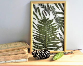 Fern framed art, real fern art, fern leaves, framed pressed plant, modern botanical art, framed wall decor, nature lover gift