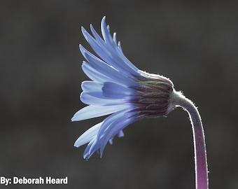 Flower Photography, Fine Art, Photo, Print, Macro Photography, Nature, Gift, Friend, Home, Decor